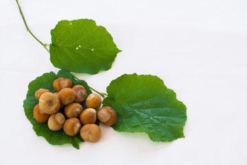 Nocciole su foglie
