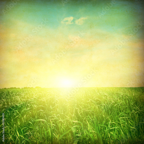 Green grass field at sunset. Grunge style photo.