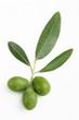 Ramo di ulivo con foglie e olive#2
