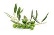 Ramo di ulivo con foglie e olive#4