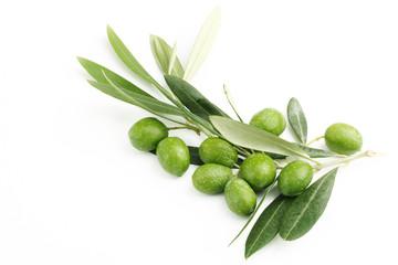 Ramo di ulivo con foglie e olive#3