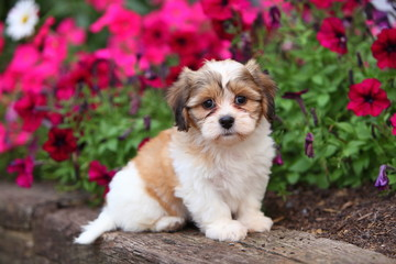 An Adorable Fluffy Puppy Sits in Garden