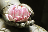 pink lotus in hand of buddha