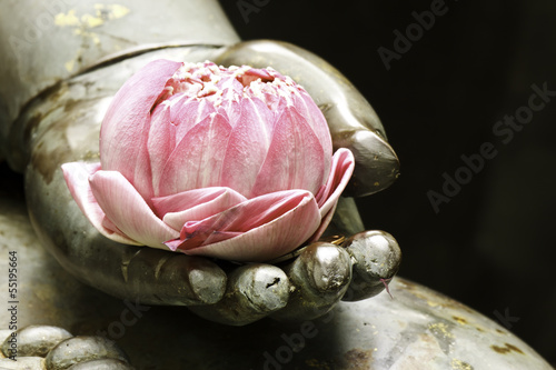 Foto op Canvas Water planten pink lotus in hand of buddha