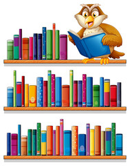 An owl above the wooden bookshelves with books