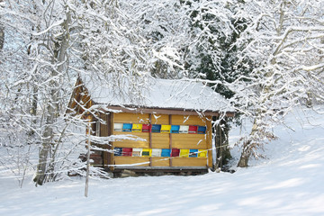 Colorful beehive in the winter