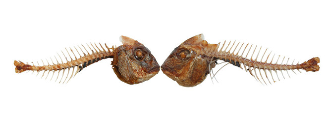 Two kissing fish skeletons - isolated