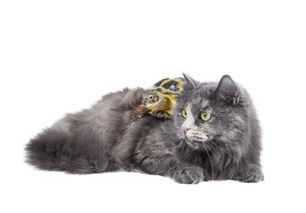 a cat and a turtle on a white background