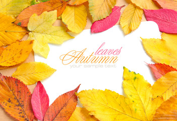 Beautiful autumn leaves and a greeting card