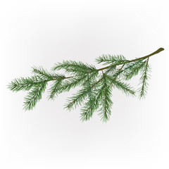 01_Christmas tree branch