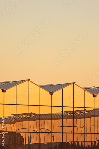 Dutch greenhouse during sunset