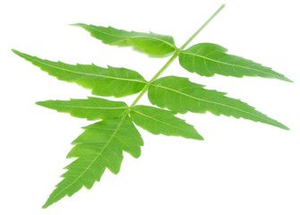 Medicinal neem leaves