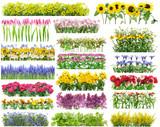 Summer flowers borders set
