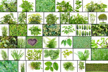 Only green color plants