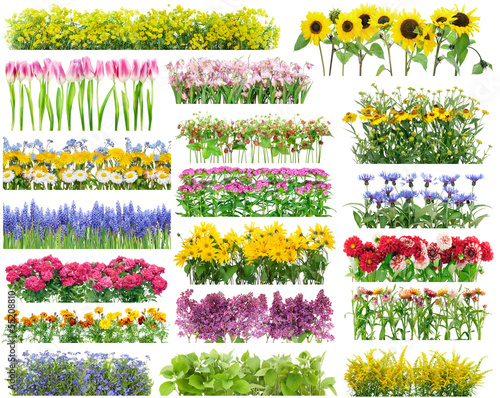 Deurstickers Tulp Summer flowers borders set
