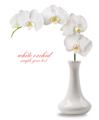 branch white orchid in vase
