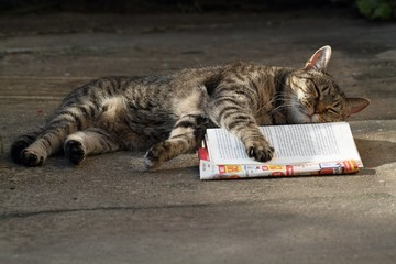 Cat sleeping on a book.