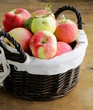 autumn harvest of organic apples in the basket