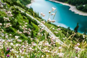 Alpenwiese mit Blumen bei Stausee