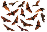Spooky Halloween flying fox bats circling in sky composite image