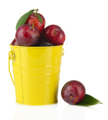 Ripe plums in pail isolated on white