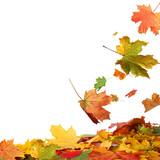Fototapety Isolated autumn leaves