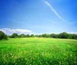 Fototapety Bright meadow flowers