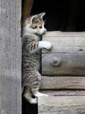 Kitten climbing on stacked wood