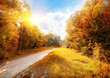 Road in a colorful autumn forest