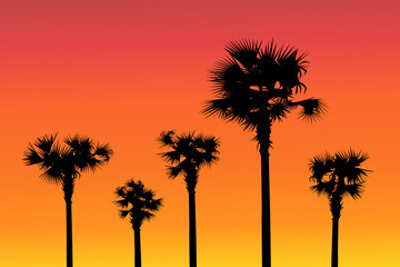 Sunset & Palm trees