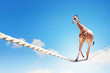 Giraffe walking on rope