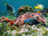 Colorful coral reef with tropical fish