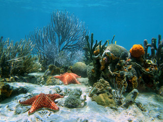 Coral with starfish under water