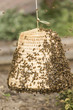 A beekeeper caught the queen in a basket