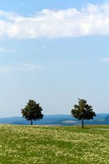 Einsame Bäume im Schwarzwald
