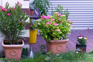 Blumentopf im Garten, Hortensie