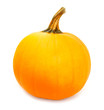 Single pumpkin isolated on a white background