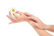woman hands french manicure with camomile daisy flower