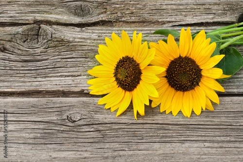 canvas print picture sunflowers
