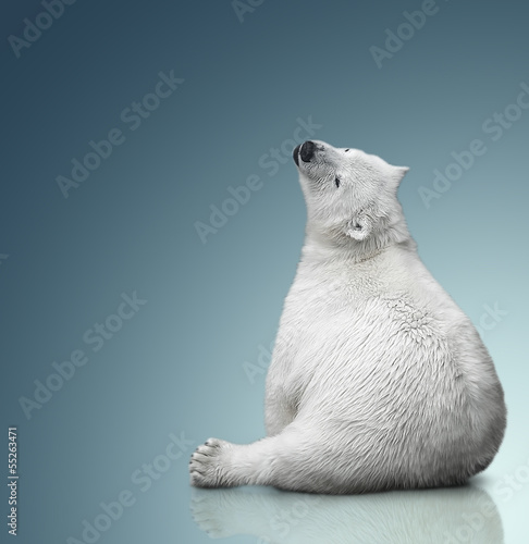 Deurstickers Ijsbeer small polar bear cub