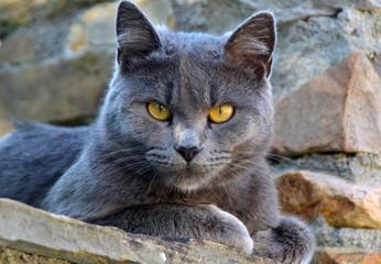 Simpático gatito gris