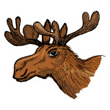 head of moose