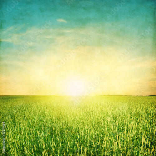 Field of green field and colorful sunset.