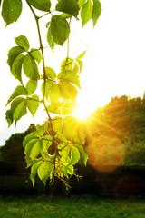 Romantischer Sonnenschein | Gegenlichtaufnahmen | Sonne