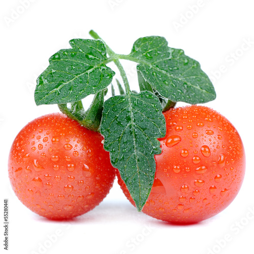 Red Tomatoes with Green Leaf and Water Drops Isolated on White