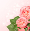 Background with delicate pink roses