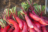 Fresh radish in rural market.