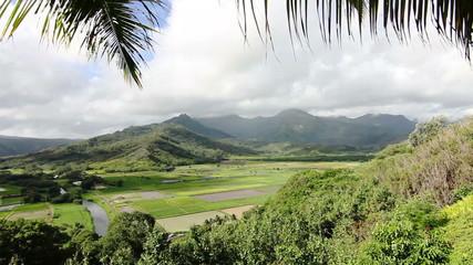 Hanalei Taro Fields Steadicam Shot