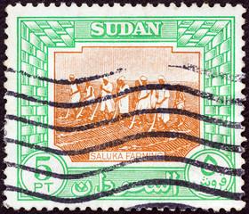 Saluka farming (Sudan 1951)