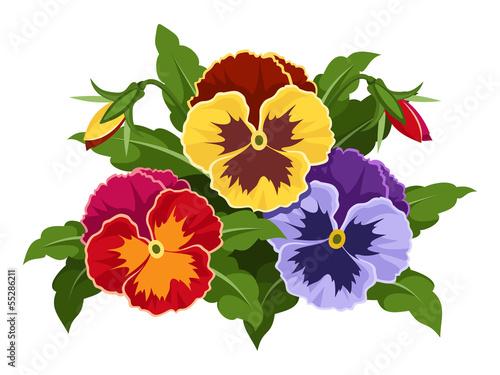 kolorowe-kwiaty-bratek-ilustracji-wektorowych